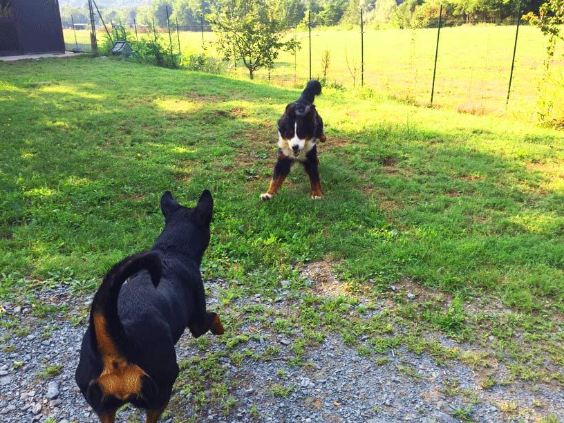 Asilo per Cani ed il Golden Retriever Cucciolo