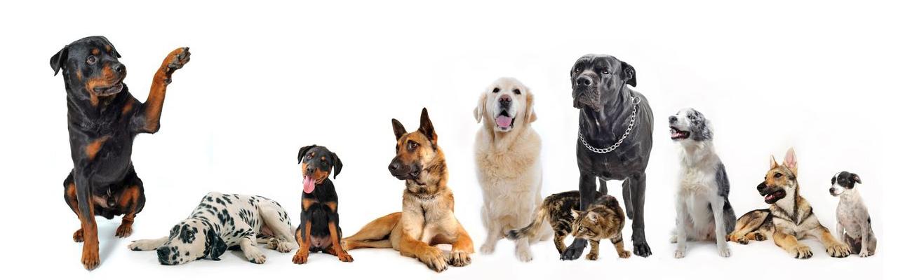 Educazione Cani e Golden Retriever Cucciolo
