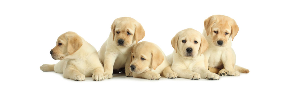 I cuccioli dall'Est