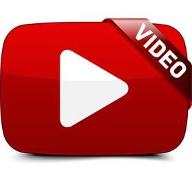 Golden Retriever Cucciolo YouTube